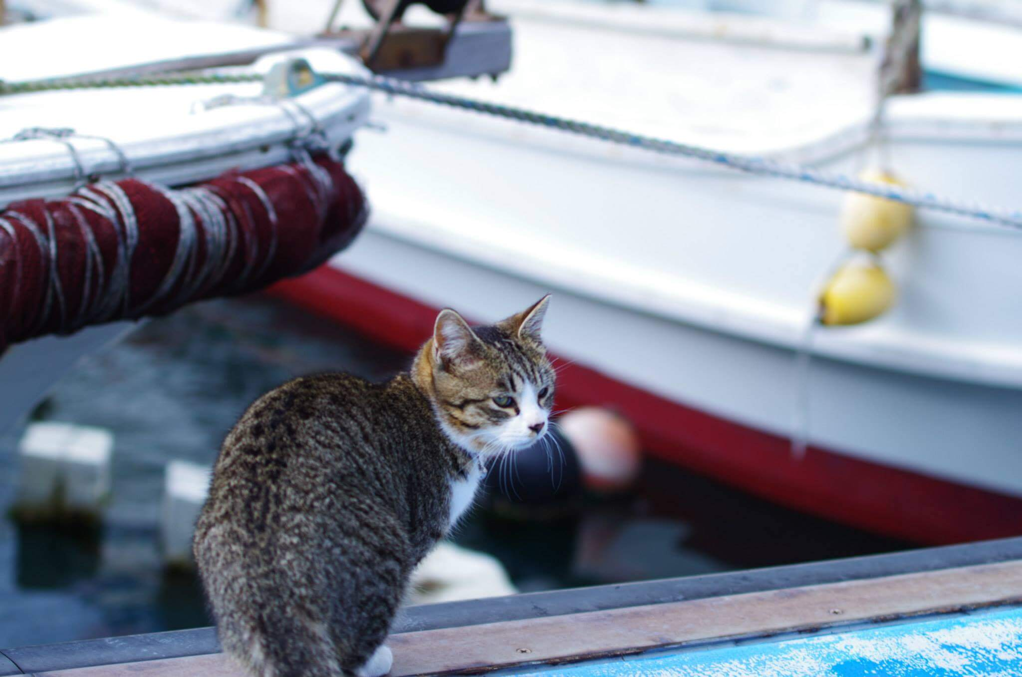 【湯島(ゆしま)】熊本は天草の猫の楽園。釣り人よりも猫が多い島は探検デートにもオススメの絶景スポット。