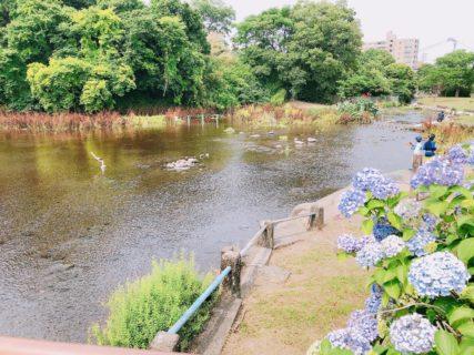 【上江津湖公園】水と緑に癒される人気の水遊びスポット【熊本市中央区神水 】
