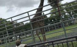 【熊本市動植物園】家族みんなで楽しめる!動植物園〜動物エリア編〜【熊本市東区健軍 】