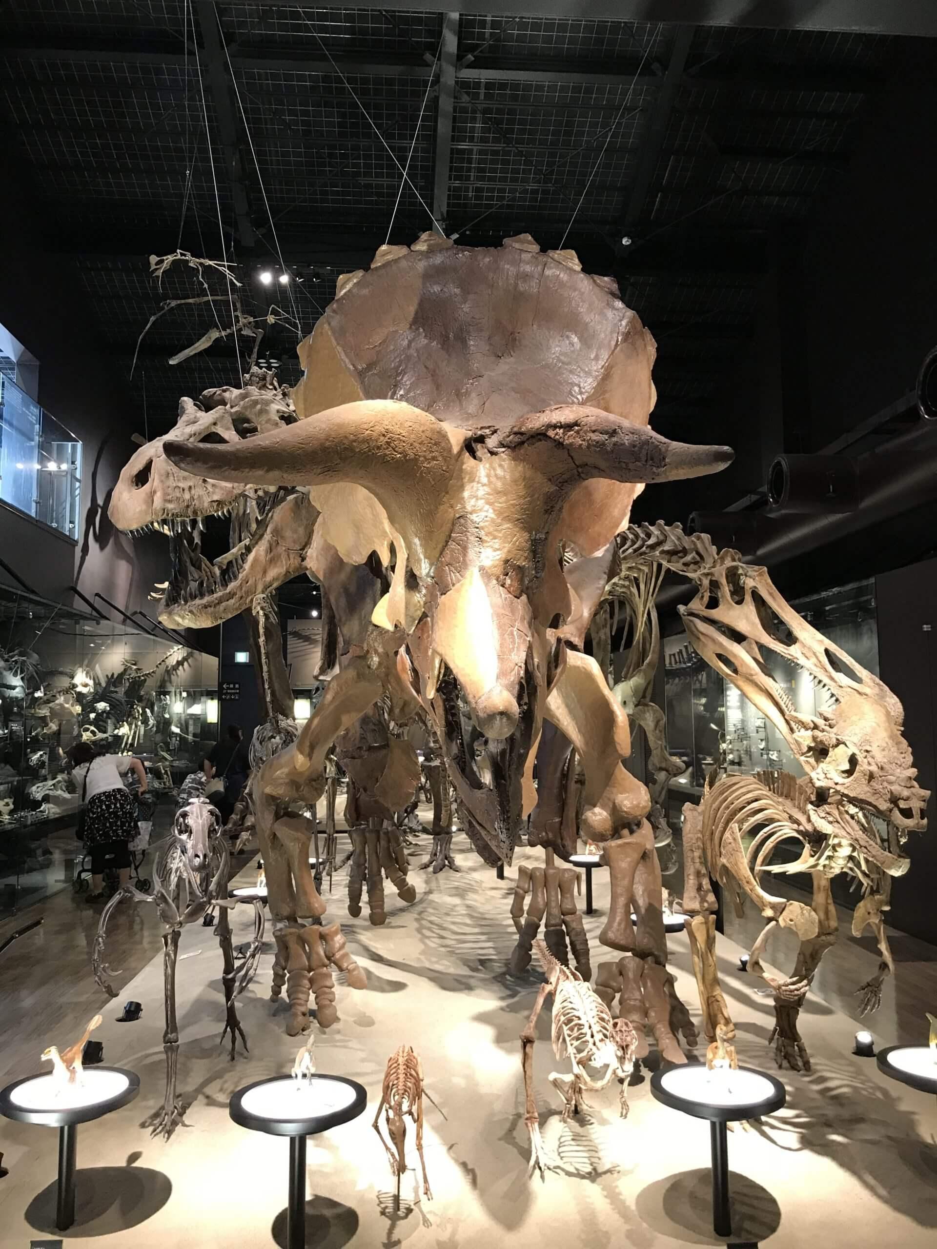 【御船町恐竜博物館】化石採掘も出来る!白亜紀にタイムスリップ~《上益城郡御船町》