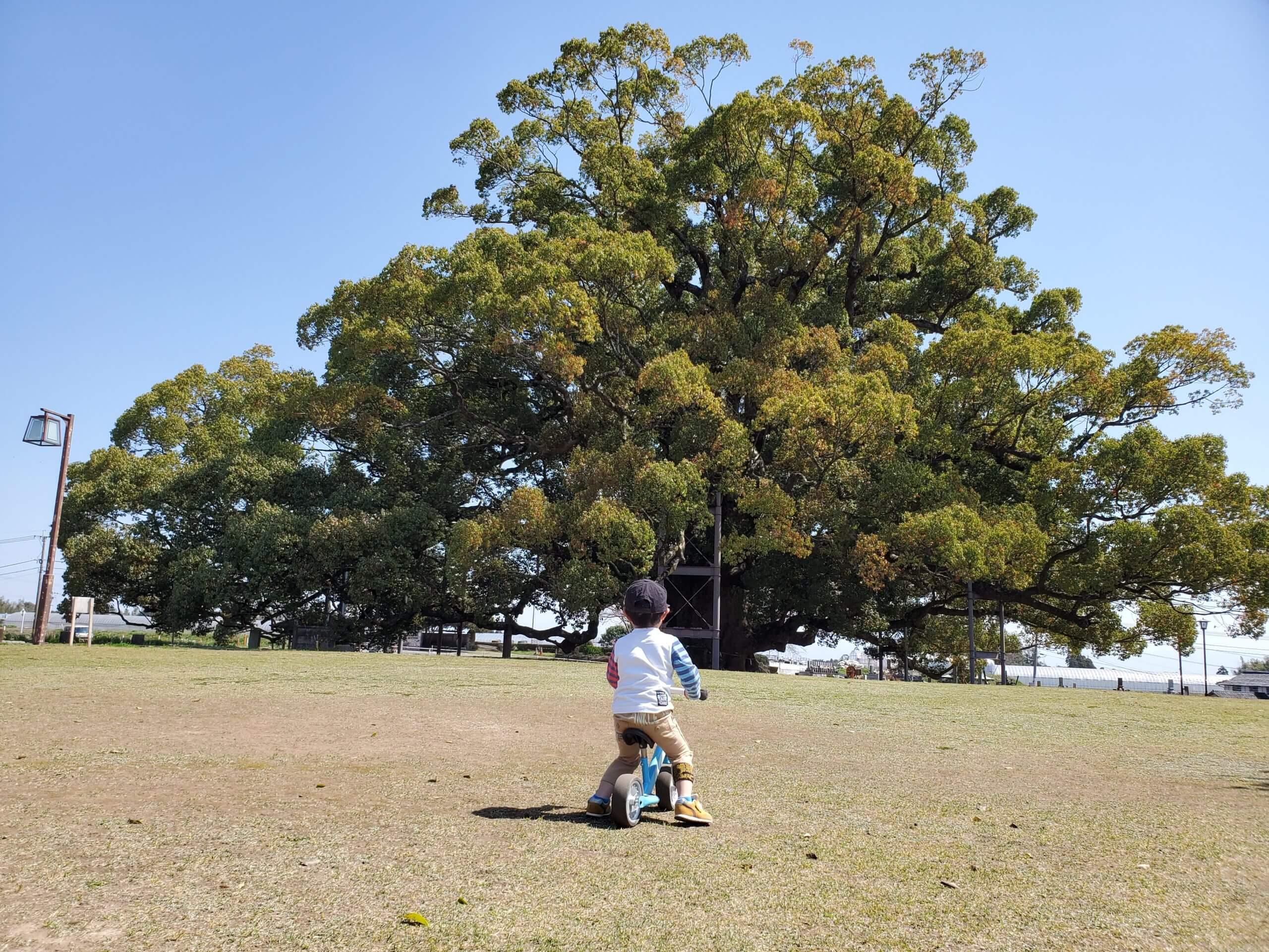 【寂心さんの樟】まるでトトロの木☆神秘的な大きな樟の木がある公園《熊本市北区北迫町》