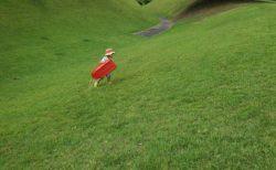 【竹迫城跡公園】絶対明日は筋肉痛…だけど、草スキーが楽しい 歴史を残す公園《合志市竹迫》