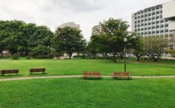 【白川公園】街中とは思えない!都会のオアシス!幼児遊具もあり♪《熊本市中央区草葉町》