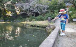 【小野泉水公園】小野小町ゆかりの地~鯉もいるし春は桜、夏は蛍も見れる公園《熊本市北区植木町小野》