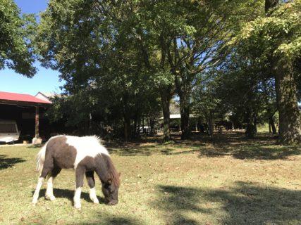 【モーモーファーム 竹原牧場】オートキャンプも出来、たくさんの動物と触れ合える牧場!《熊本県阿蘇市西町》