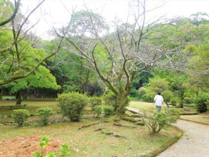 【北岡自然公園】自然あふれる庭園で歴史を学ぼう♪《熊本市中央区横手》