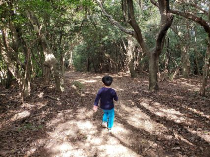 【弁天山公園】自然あふれる山の中の公園☆《合志市野々島》