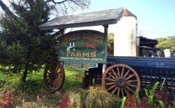 【オオヤブデイリーファーム】農林水産大臣賞を受賞した牧場が合志にありました!《合志市須屋》