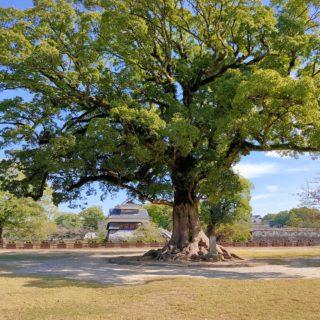 【熊本城 二の丸広場】竹あかりのイベントもあります★市民の憩いの広場《熊本市中央区二の丸 》