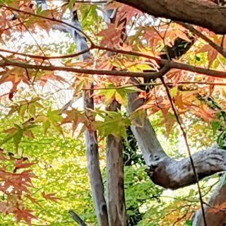 【釣耕園(ちょうこうえん)】ひっそり佇む庭園★ひとけの少ない紅葉撮影スポット《熊本市西区島崎 》