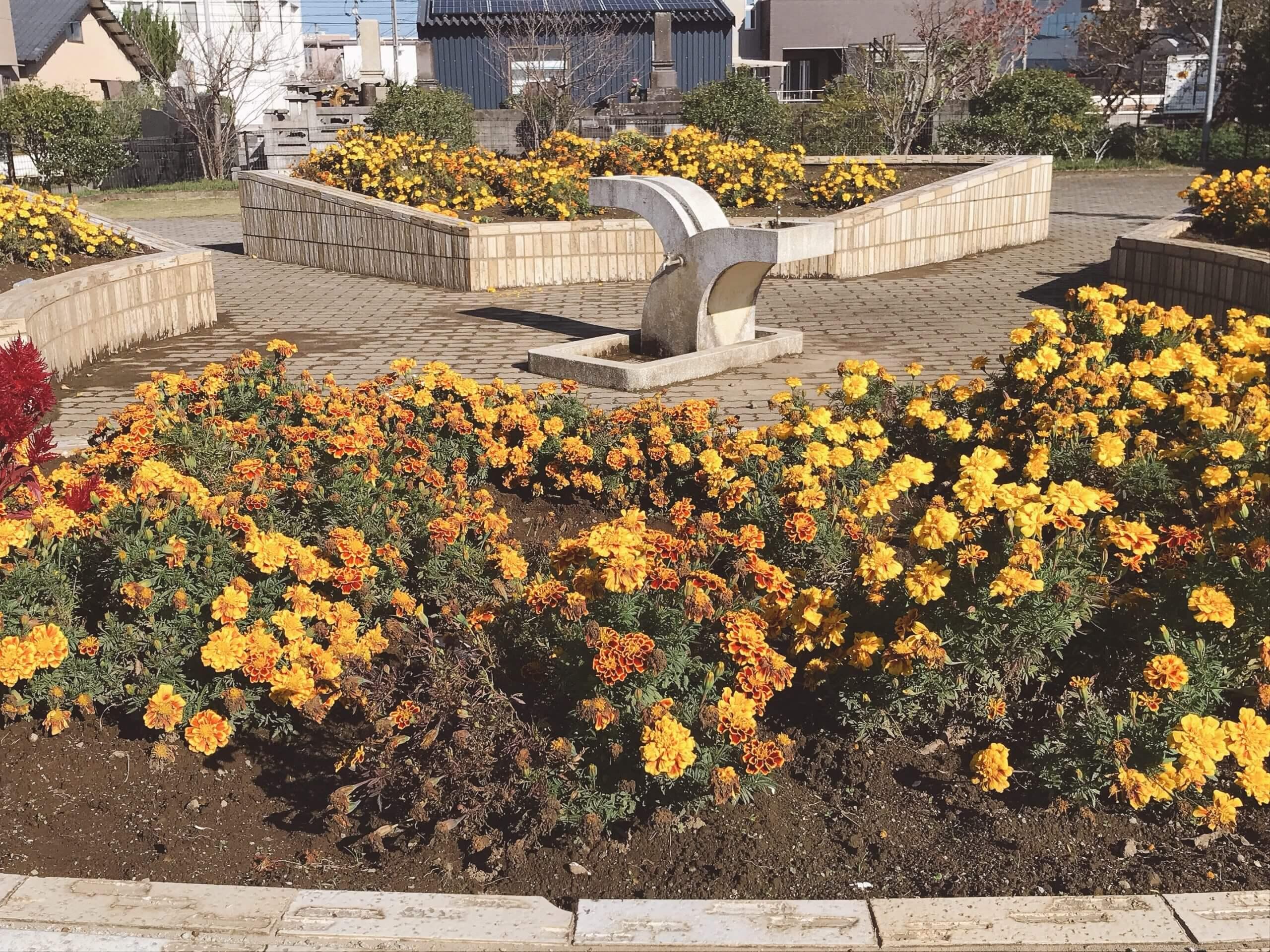【田迎良町公園】キレイに手入れされた芝生と花壇に癒される♪《熊本市南区良町》