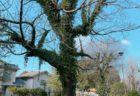 【宮の本公園】遊具もたくさん自然豊かな街中の小さな公園♪《熊本市中央区新屋敷》