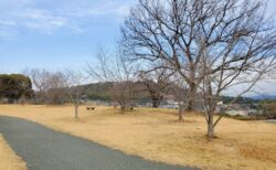 【万日山緑地公園】お花見スポット発見!桜の木の数が凄い!!山の上の、のんびり公園☆《熊本市西区春日》