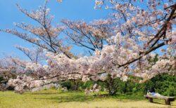 【小萩園】長~くお花見できる☆隠れお花見スポット!《熊本市北区貢町》