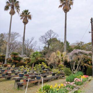 【監物台樹木園】熊本城、加藤神社そば♪街中のひっそり植物園《熊本市中央区二の丸》
