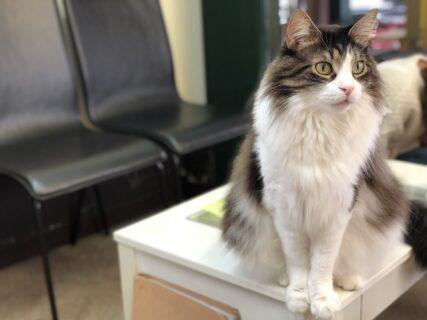 【ねこカフェ MICO – ミコ – 】可愛い猫ちゃんと触れ合える子連れも可能な猫カフェ《熊本市東区西原》