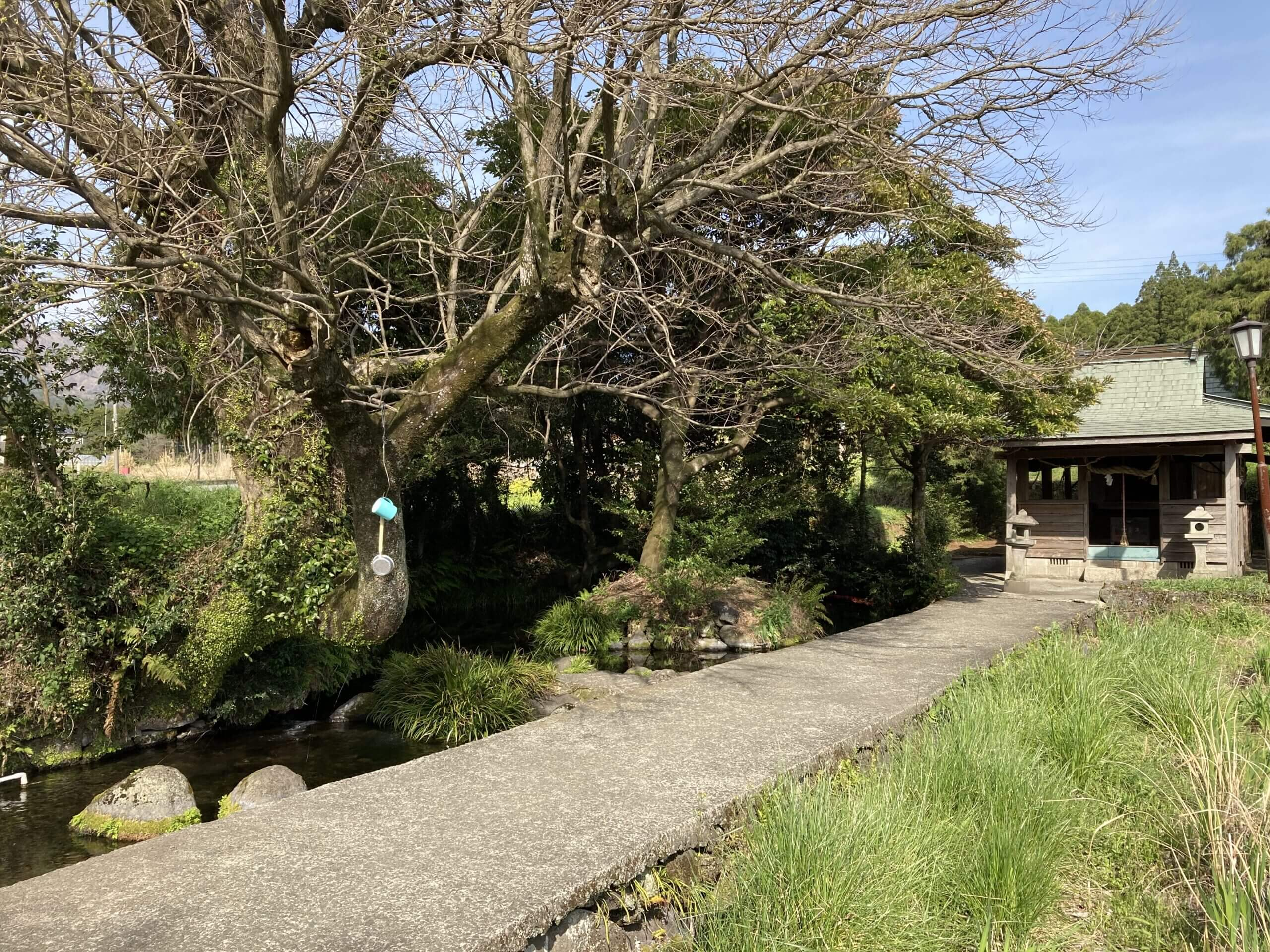 【池の川水源】これからの季節に水源巡りはいかがでしょうか?!《熊本県阿蘇郡南阿蘇村中松》