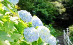 【住吉自然公園】アジサイの名所♪住吉神社や見所散策も楽しめる公園!《宇土市住吉町》