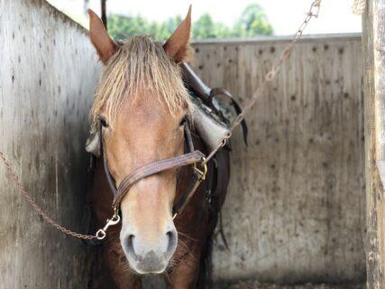 【阿蘇うま牧場 – 阿蘇市永草 – 】天気のいい日は親子で乗馬体験!